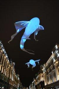 Goldfish blue Image Paul Lindus